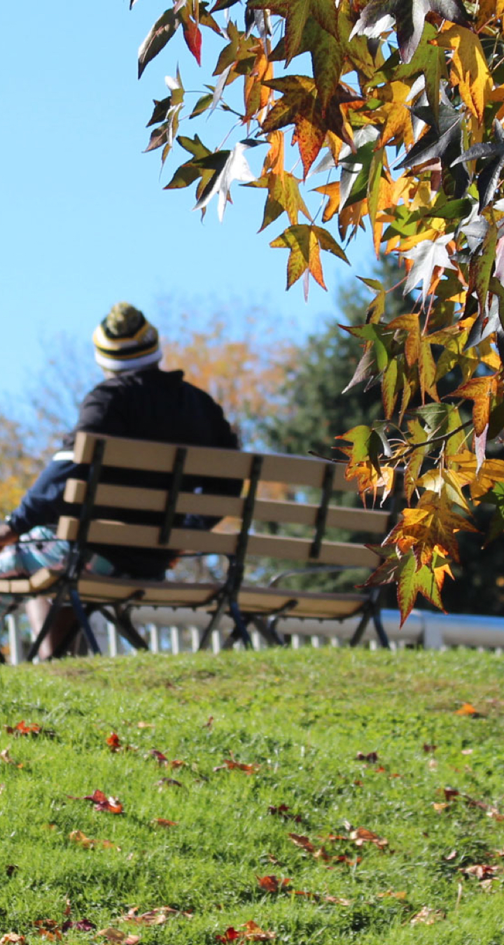 Person sitting on bench in park under blue sky